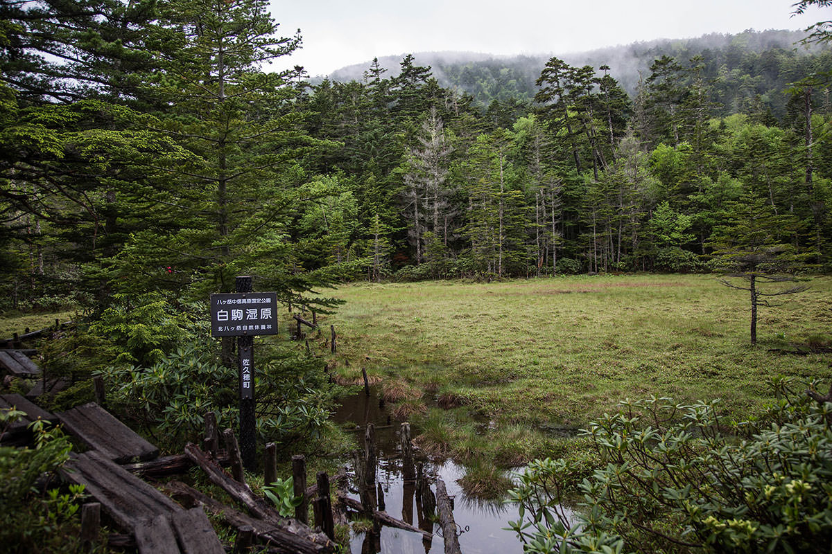 【にゅう】登山百景-白駒湿原
