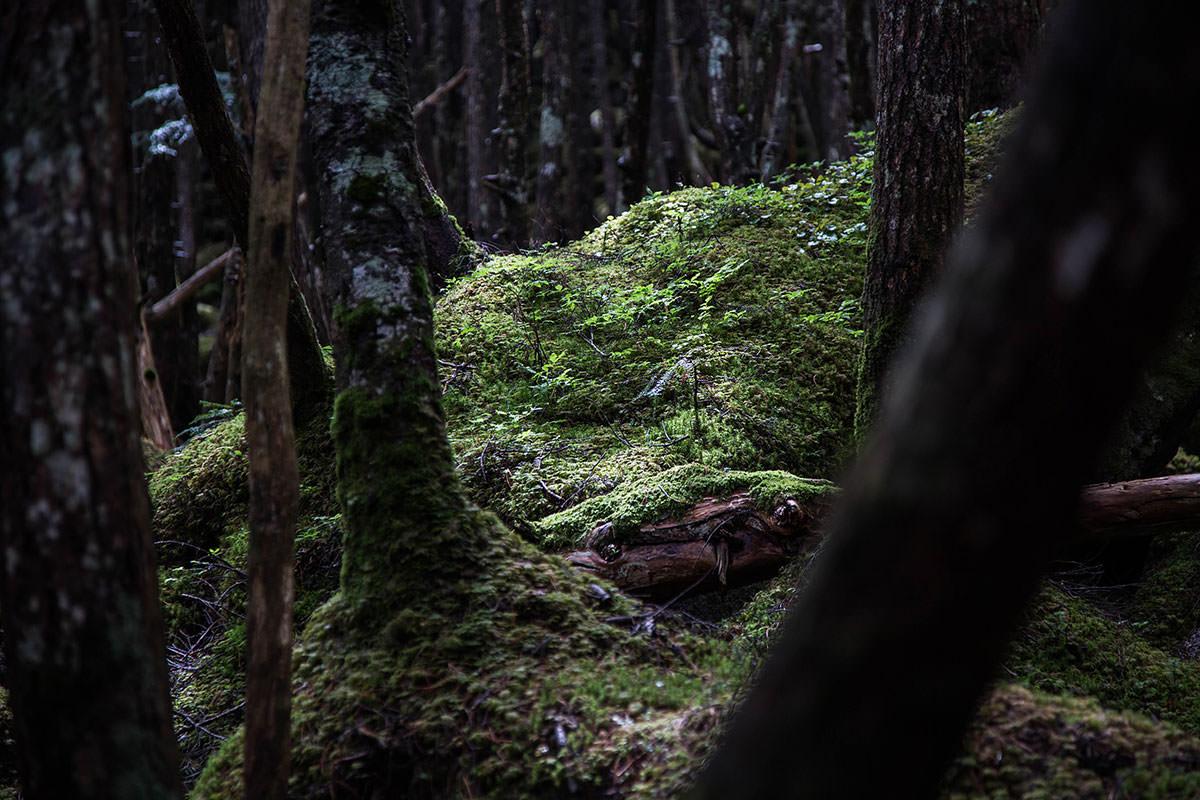 【にゅう】登山百景-変わらず苔は多い
