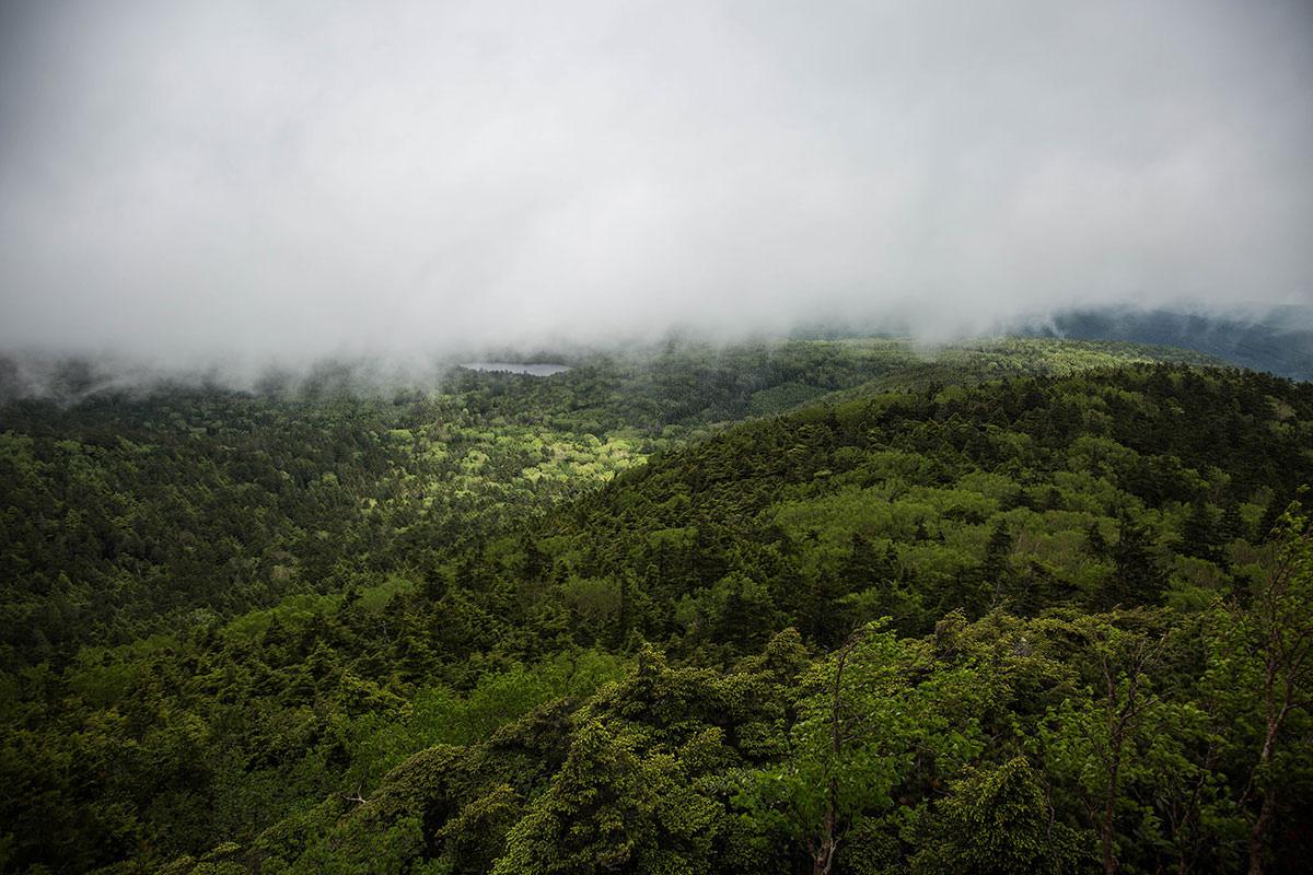 【にゅう】登山百景-白駒池を見下ろす