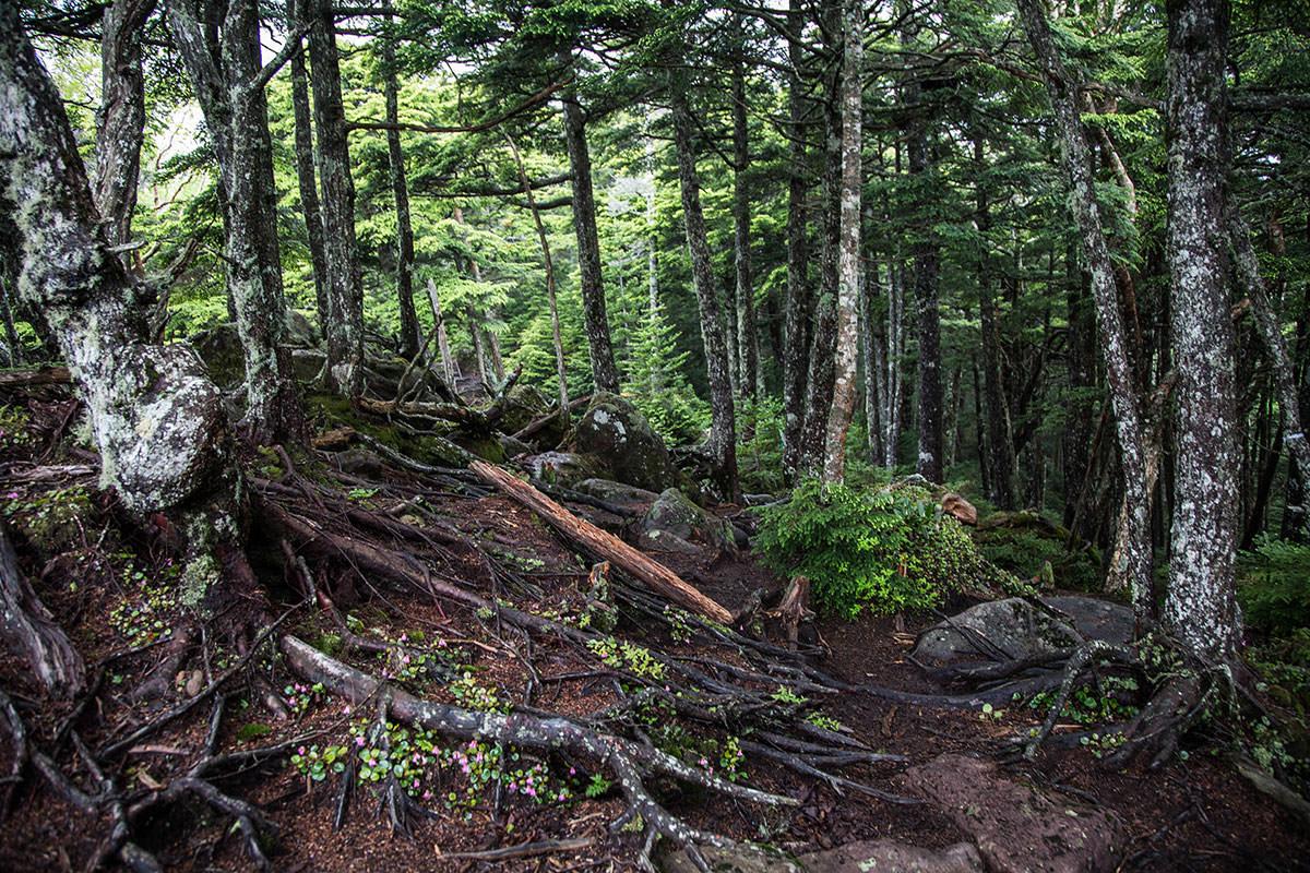 【にゅう】登山百景-樹林帯を中山峠へ