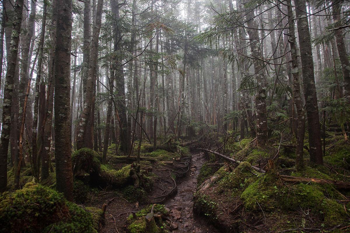 【にゅう】登山百景-靄の樹林帯を歩く