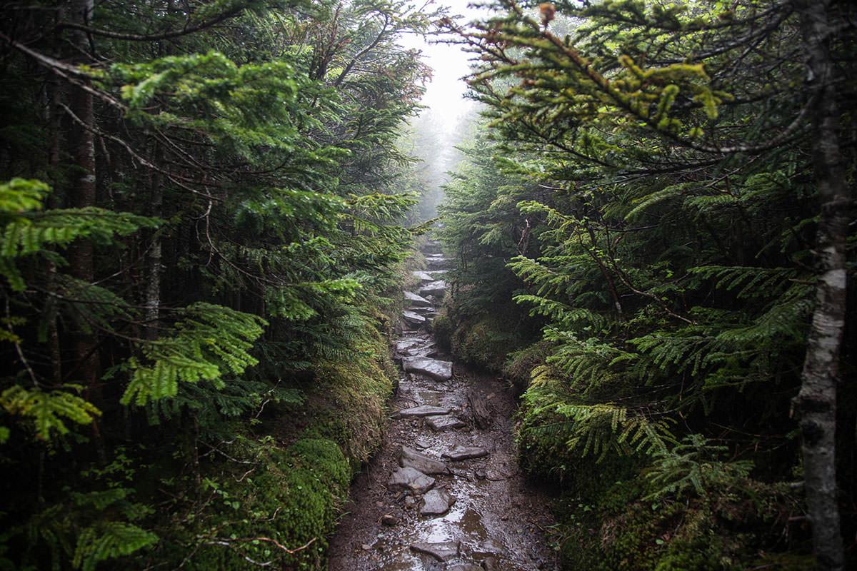【にゅう】登山百景-左右には木がビッシリ
