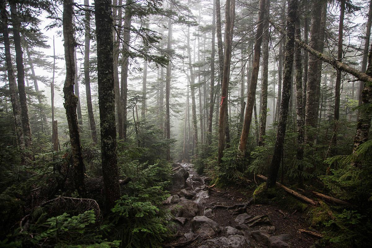 【にゅう】登山百景-樹林帯を下っていく