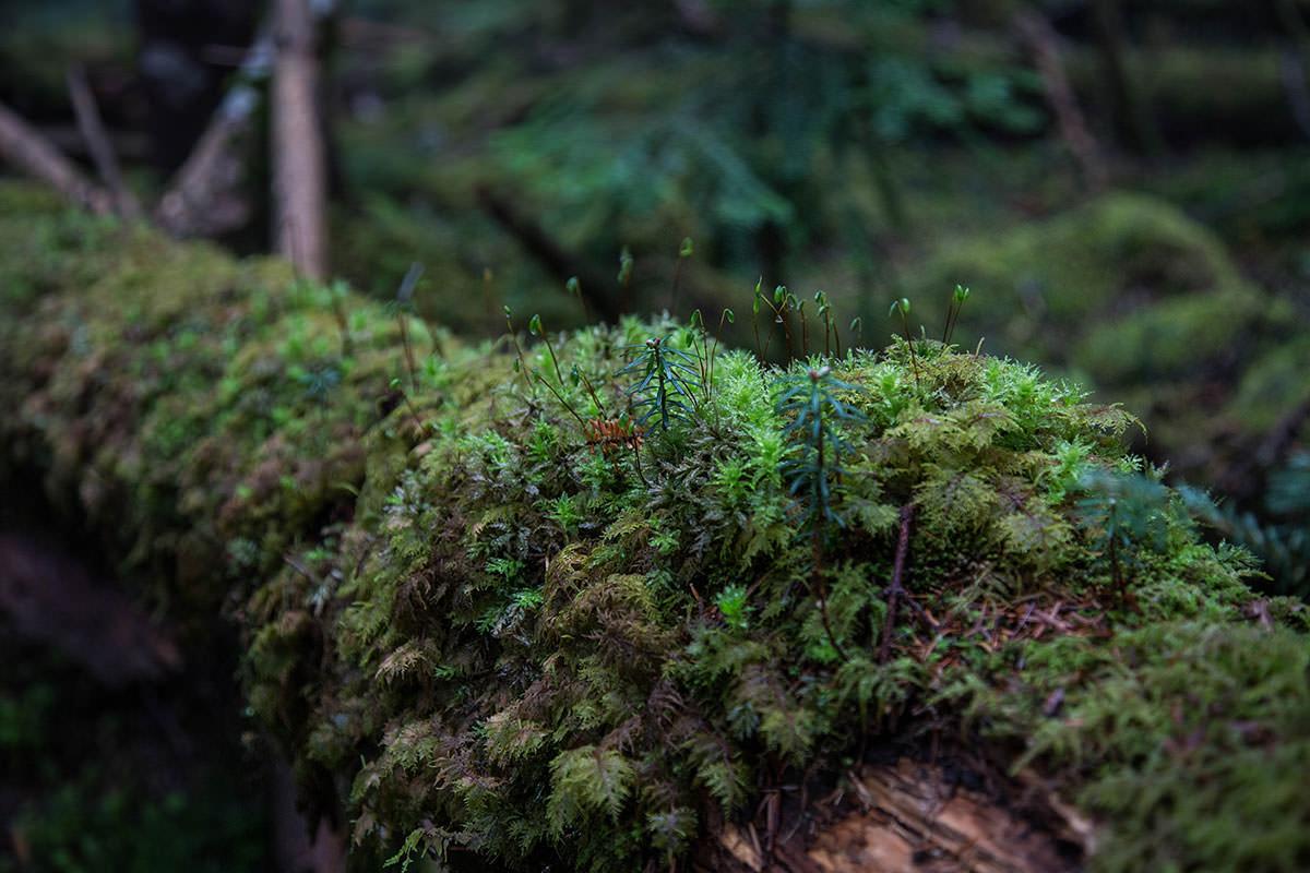 【にゅう】登山百景-倒木には苔