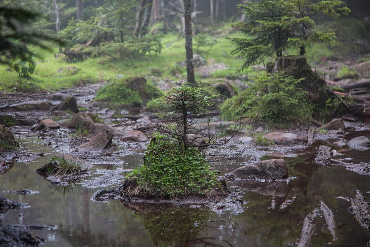 【にゅう】登山百景-水たまりの中に島のよう