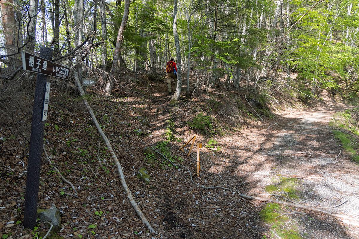 林道からシャクナゲ尾根へ入って行く