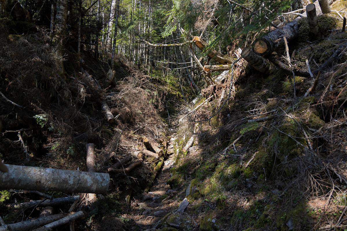 森の中を進んでいく