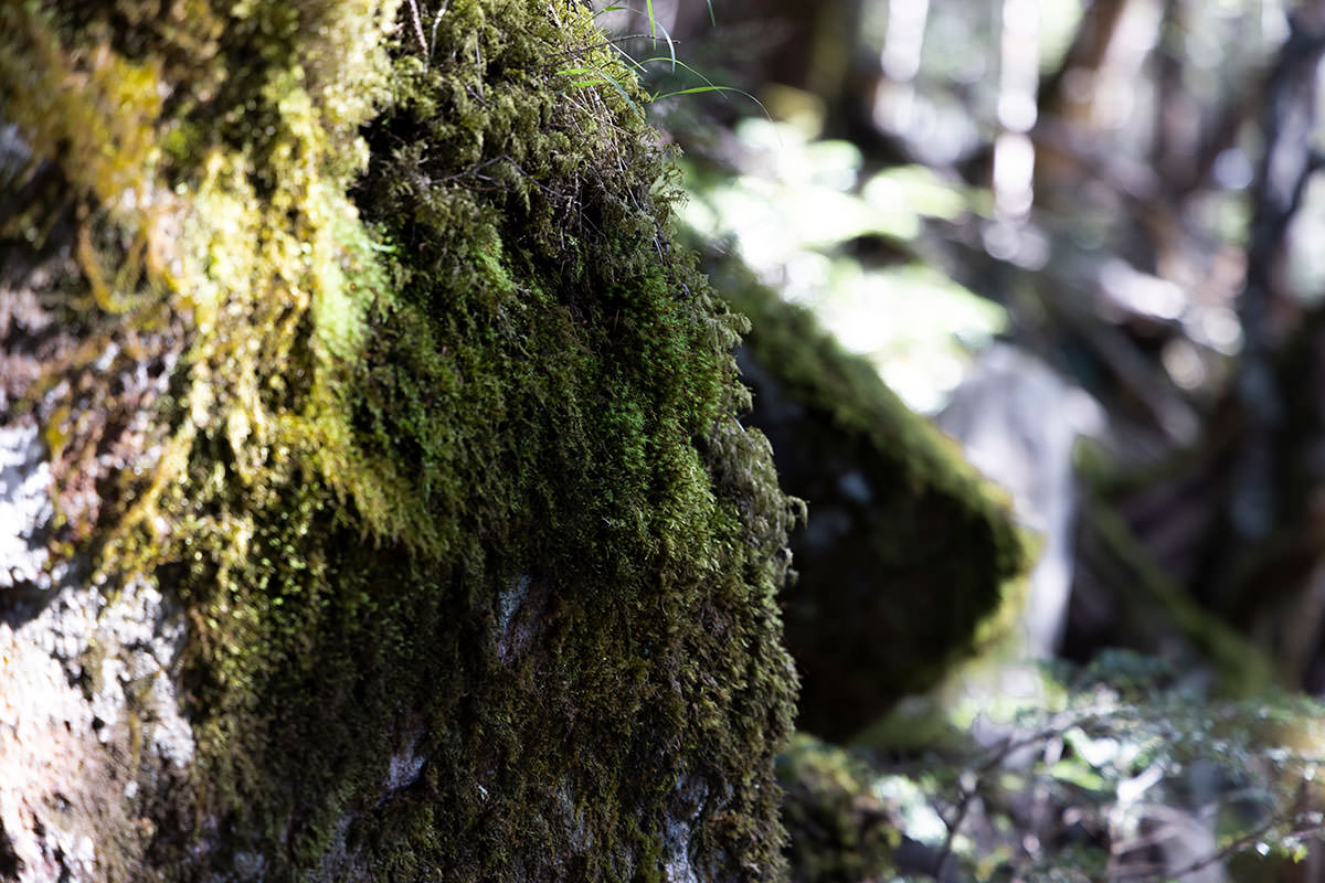 にゅう北八ヶ岳-岩にも苔