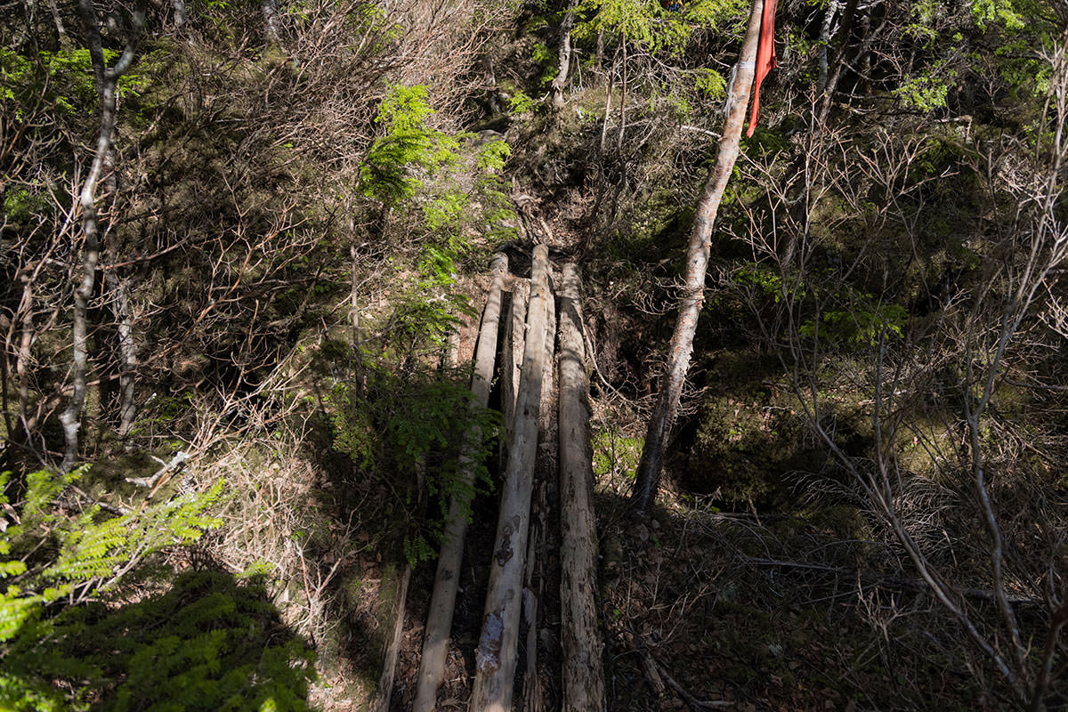 丸太を束ねた橋