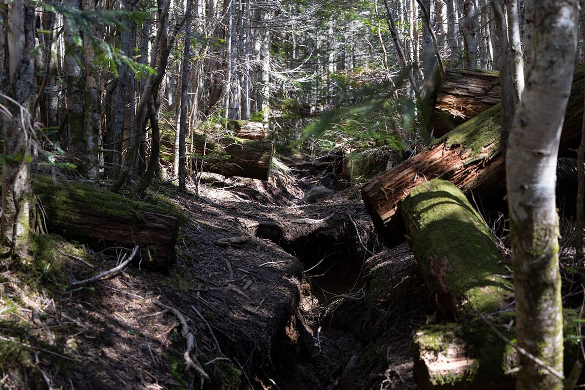 整備された木が脇にあって苔が生えてる