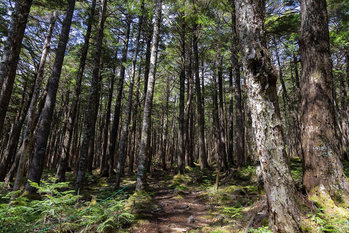にゅう北八ヶ岳-平坦な森
