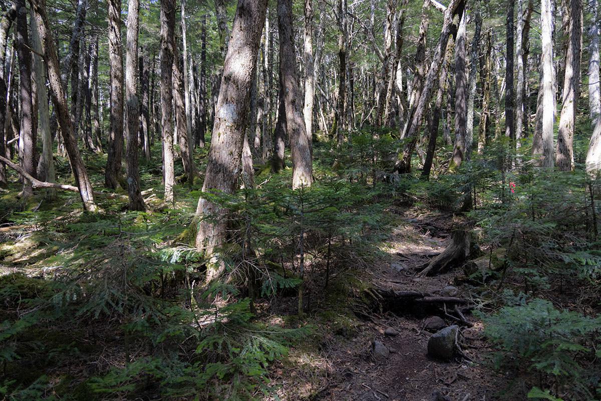 背の高い木の下で背の低い木がいっぱいに生えてる