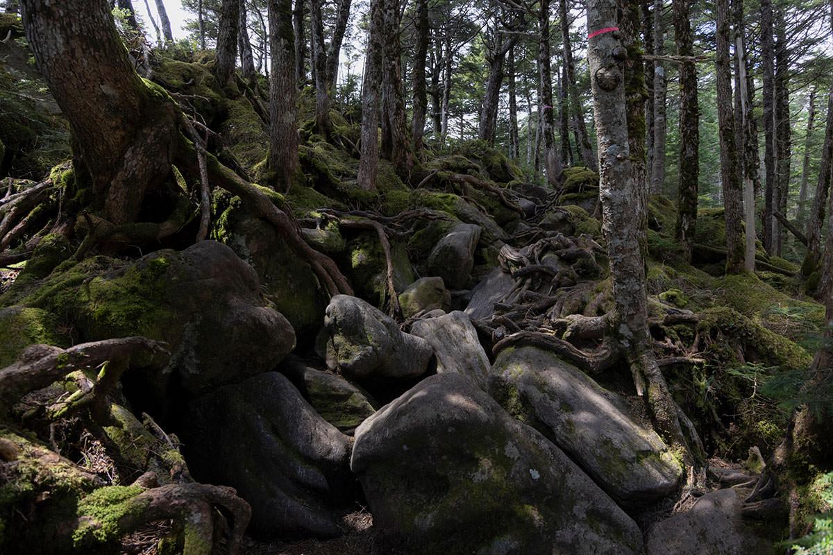 岩もいっぱい