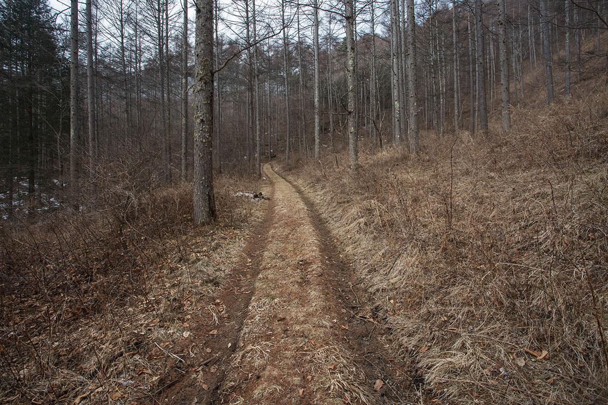【御座山】登山百景-林道を行く