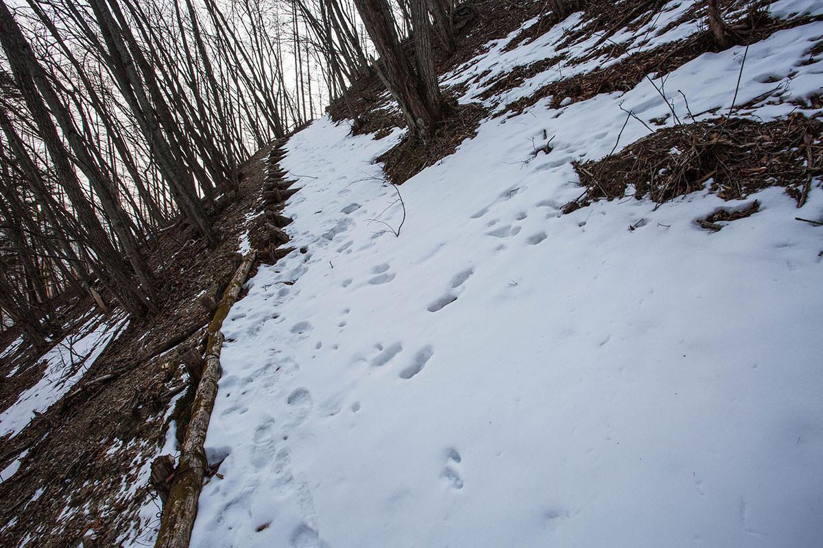 【御座山】登山百景-斜めの雪が歩きづらい