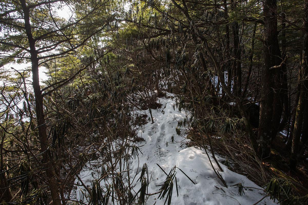 【御座山】登山百景-シャクナゲだらけの尾根