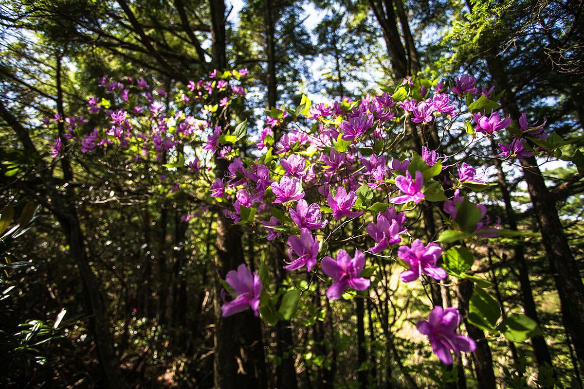 御座山-違う花も咲いてる