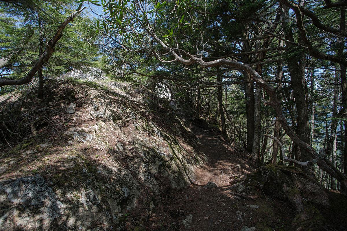 御座山-ここを抜けたら山頂