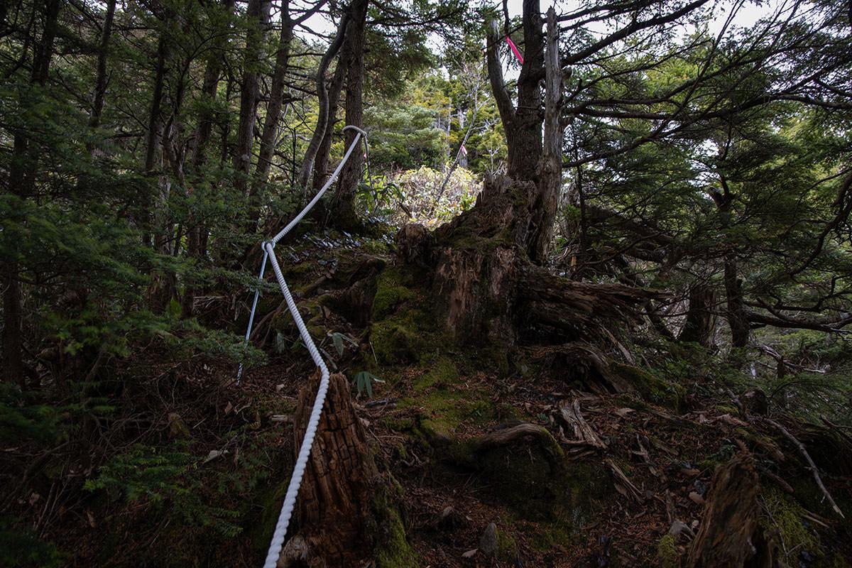 老ノ倉山-急だし段差も高い
