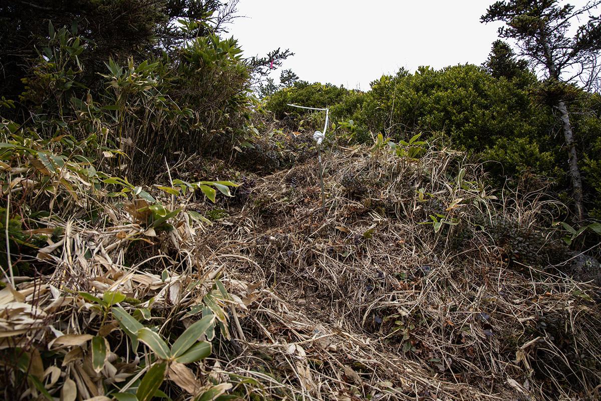 老ノ倉山-ココを登ったら山頂