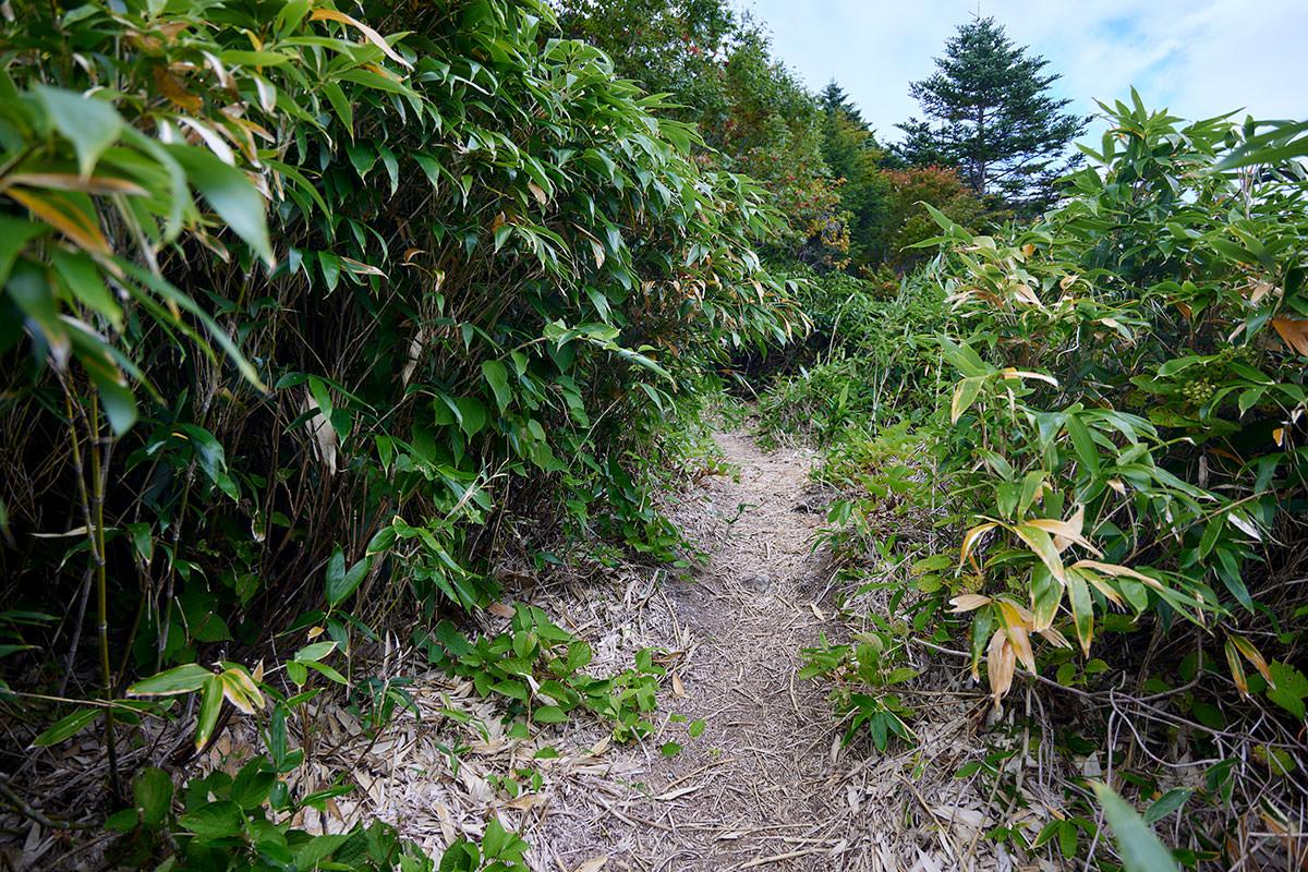 老ノ倉山-笹の中を登っていく