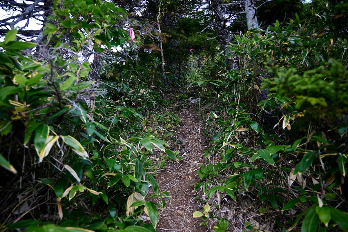 老ノ倉山-木の中を歩いていく
