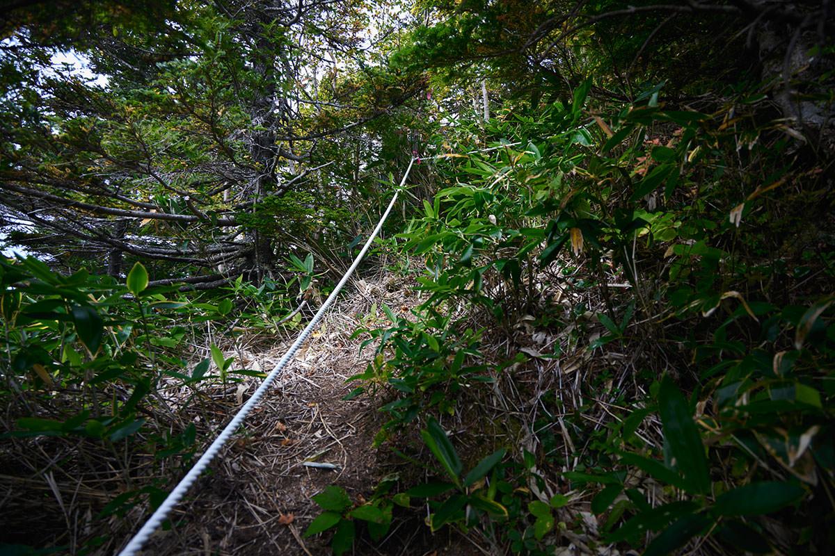 老ノ倉山-また木の間に入っていく