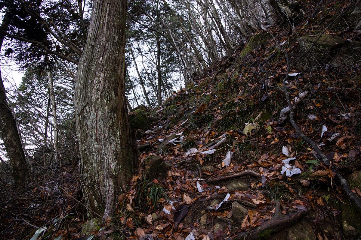 落ち葉と木の根っ子の登り
