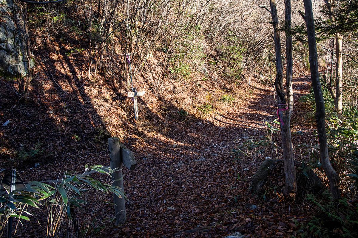 急登が終わって再び林道