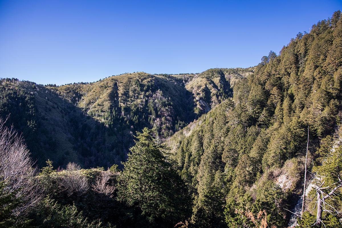 西側の谷を挟んだ向こうは綺麗な笹原