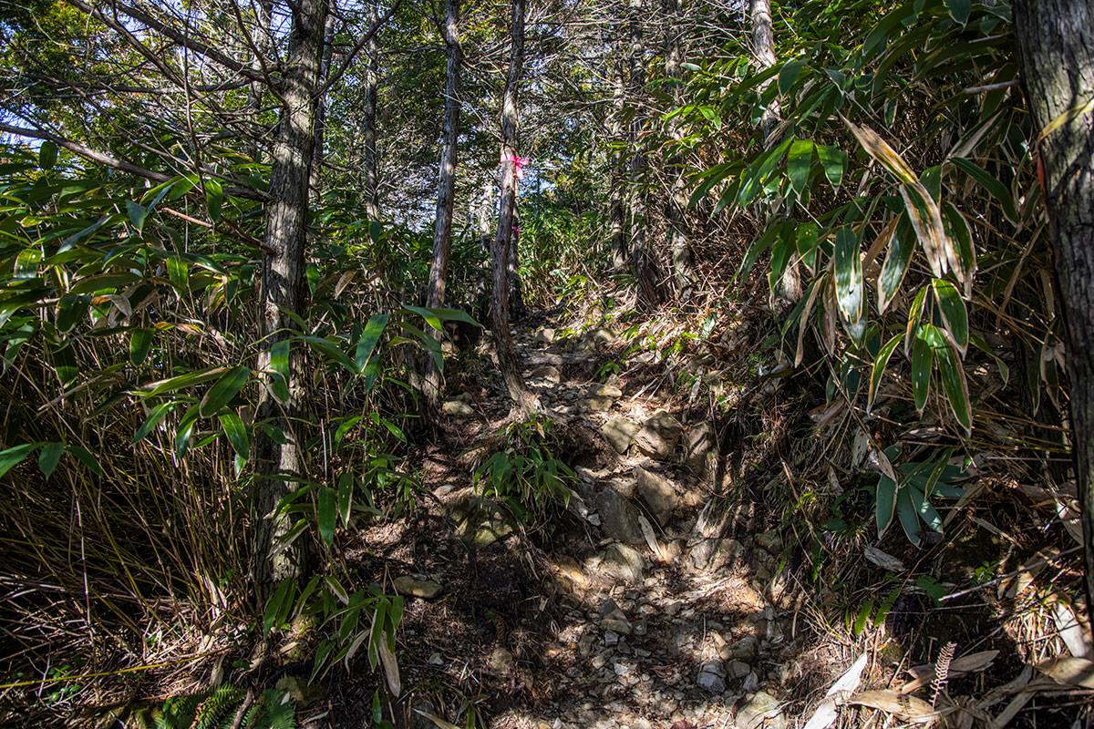 森の中を折り返して登る