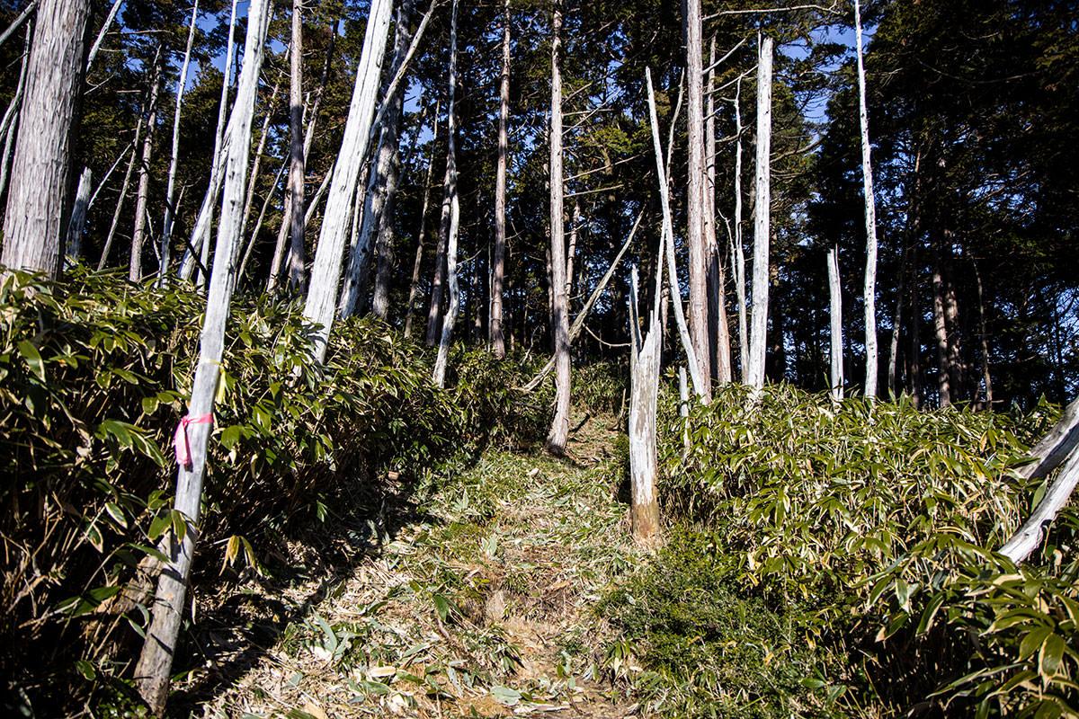 笹から針葉樹の森へ