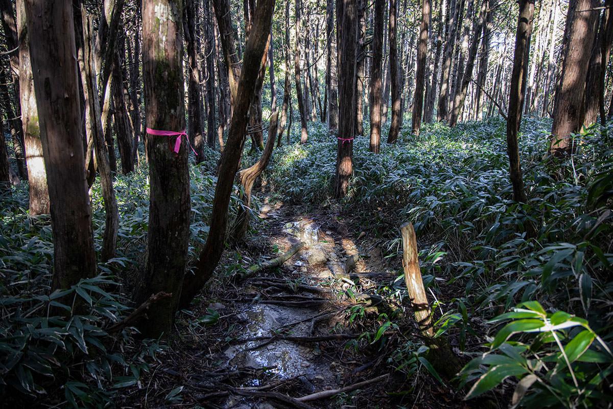 薄暗い森の中、笹の間を少し下っていく