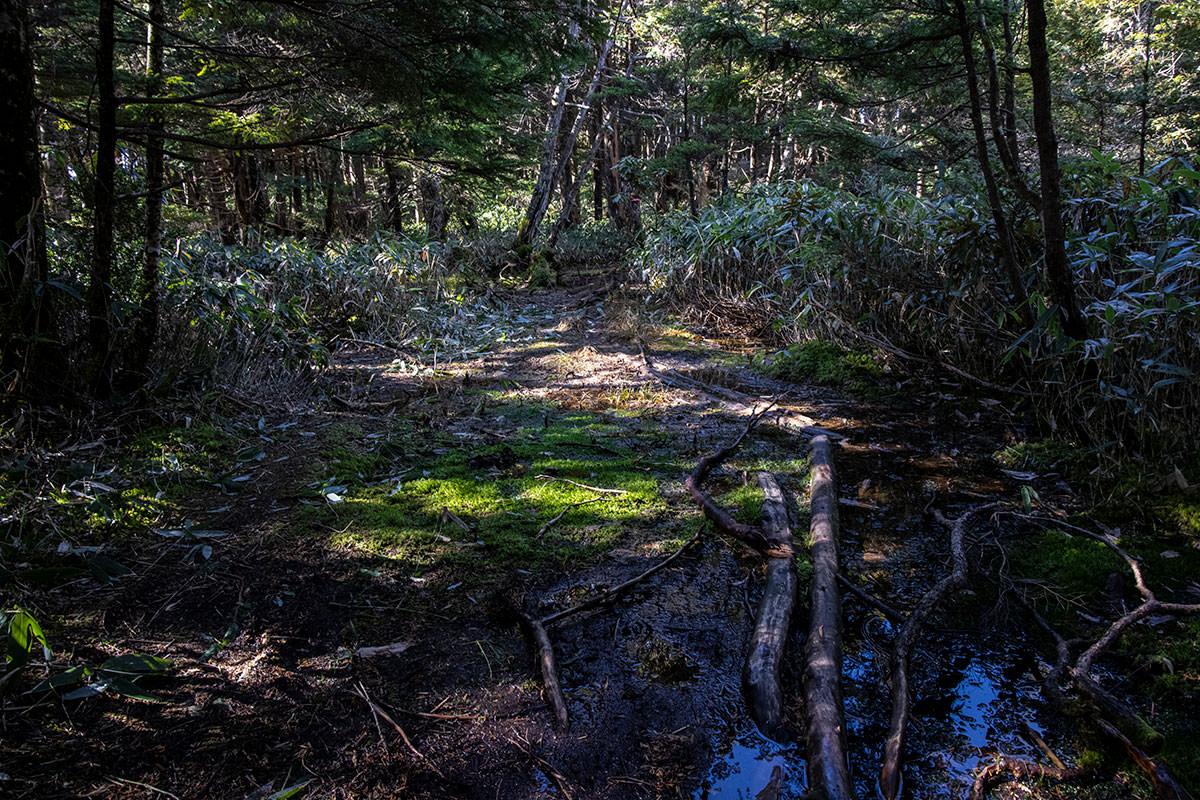 また森の中に入って湿度が多めの登山道