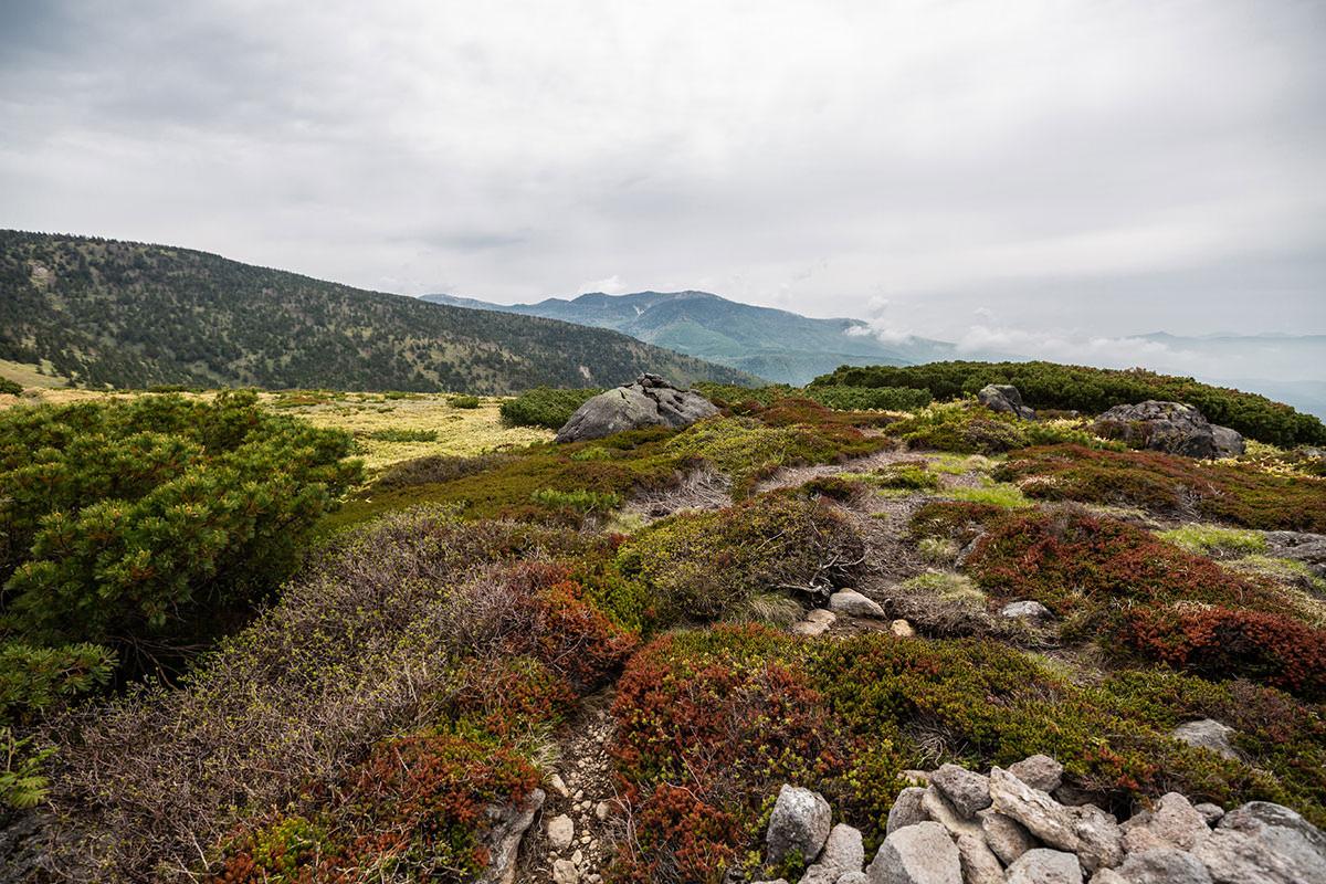 【御飯岳】登山百景-向こうに草津白根山