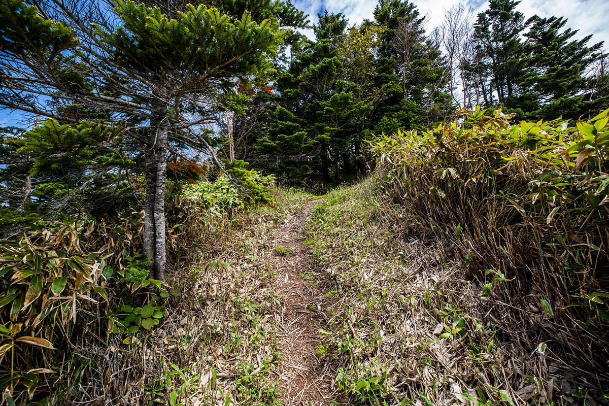 【御飯岳】登山百景-木の中へ入っていく