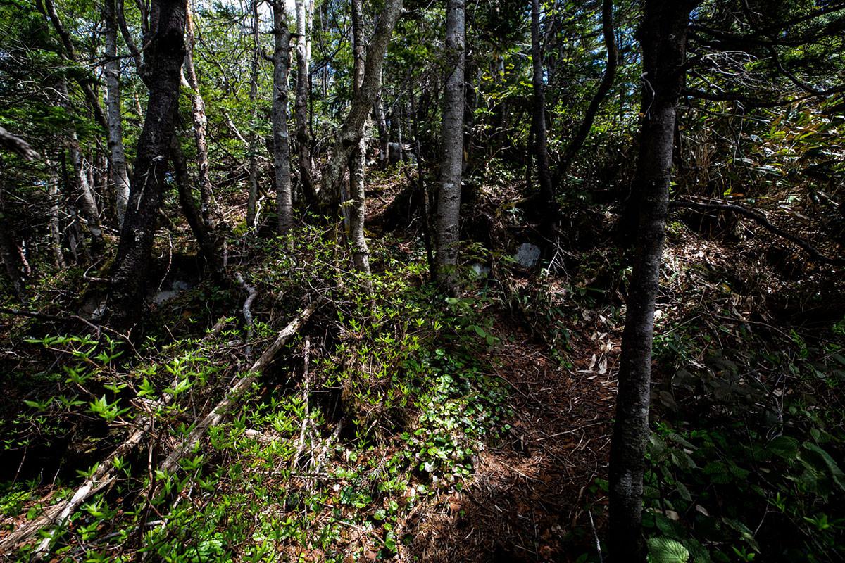 【御飯岳】登山百景-狭くて木が多い