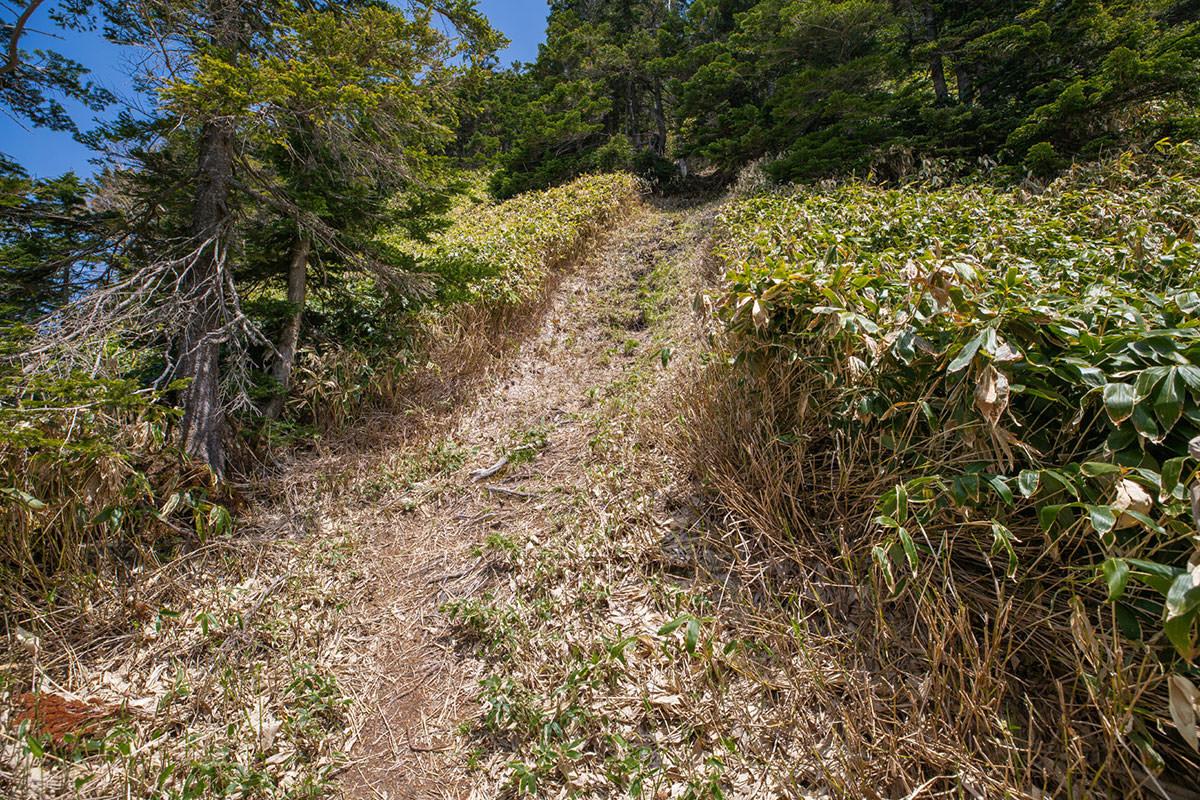 【御飯岳】登山百景-一気に登る