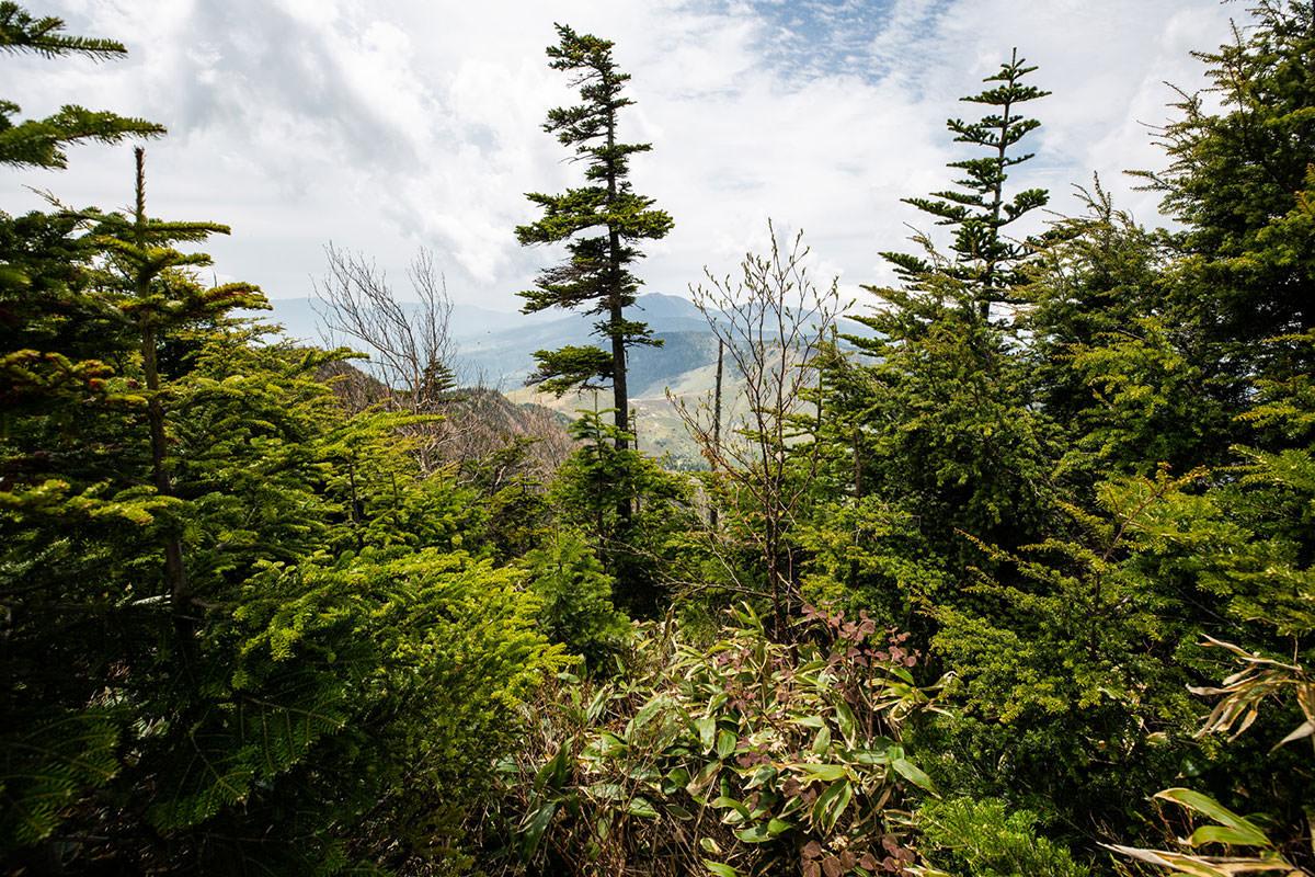 【御飯岳】登山百景-木の間から毛無峠