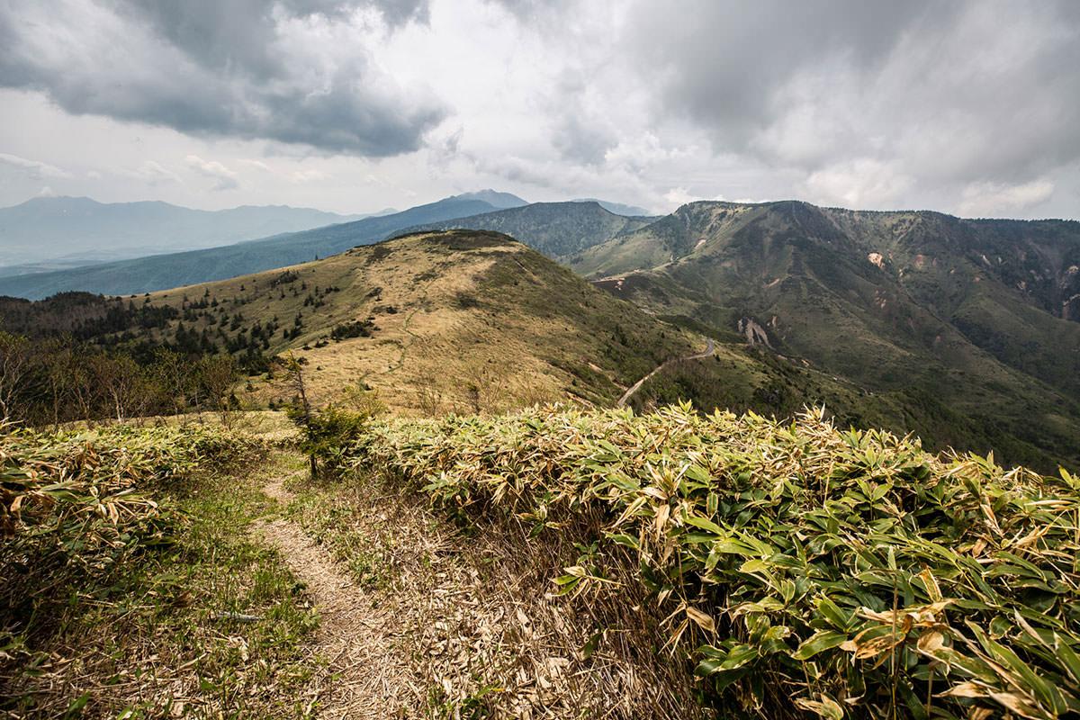 【御飯岳】登山百景-笹原に戻ってきた