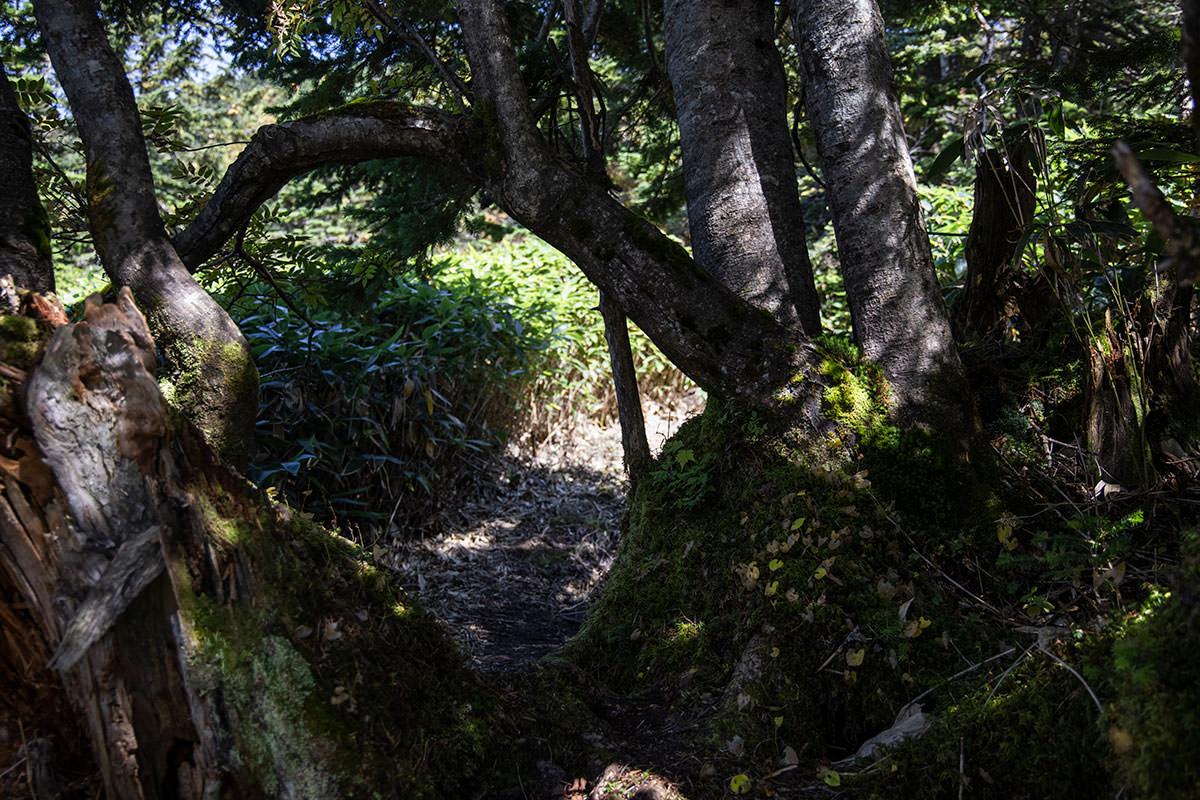 木を潜っていくようなところもある