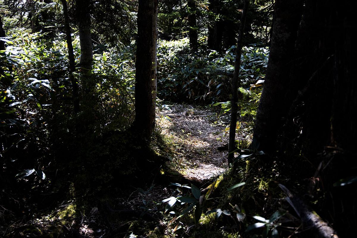 登山道の周りには笹がいっぱい