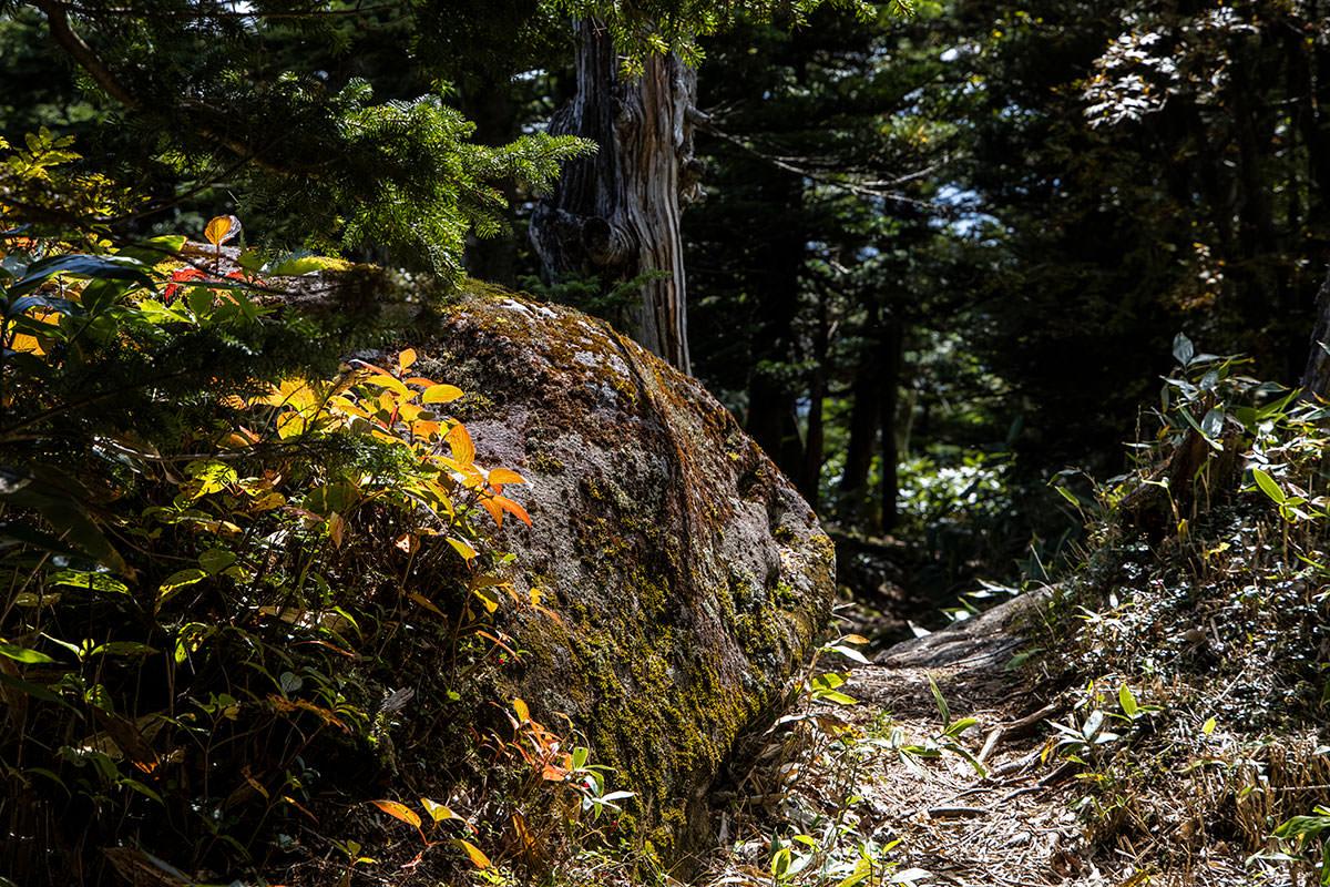 登山道には赤い葉っぱも少し