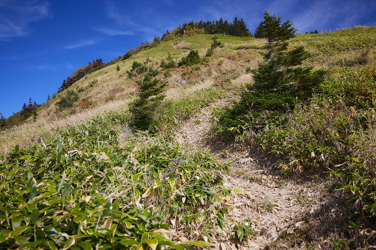 御飯岳-笹原から登り返す