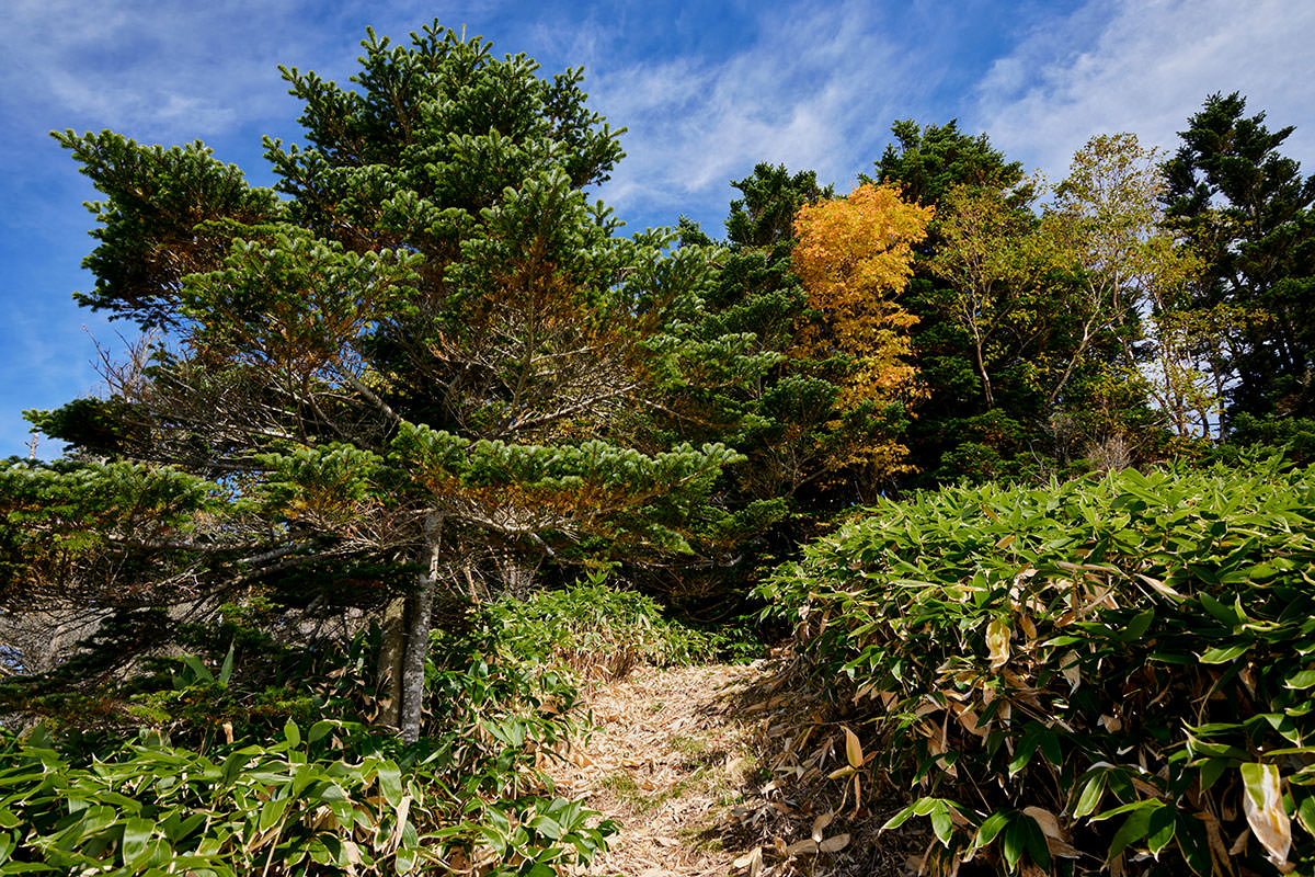 御飯岳-笹原を登って森の中に入る