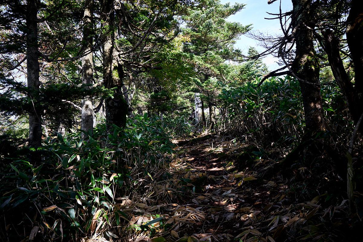 御飯岳-笹に囲まれるので雰囲気が怪しい