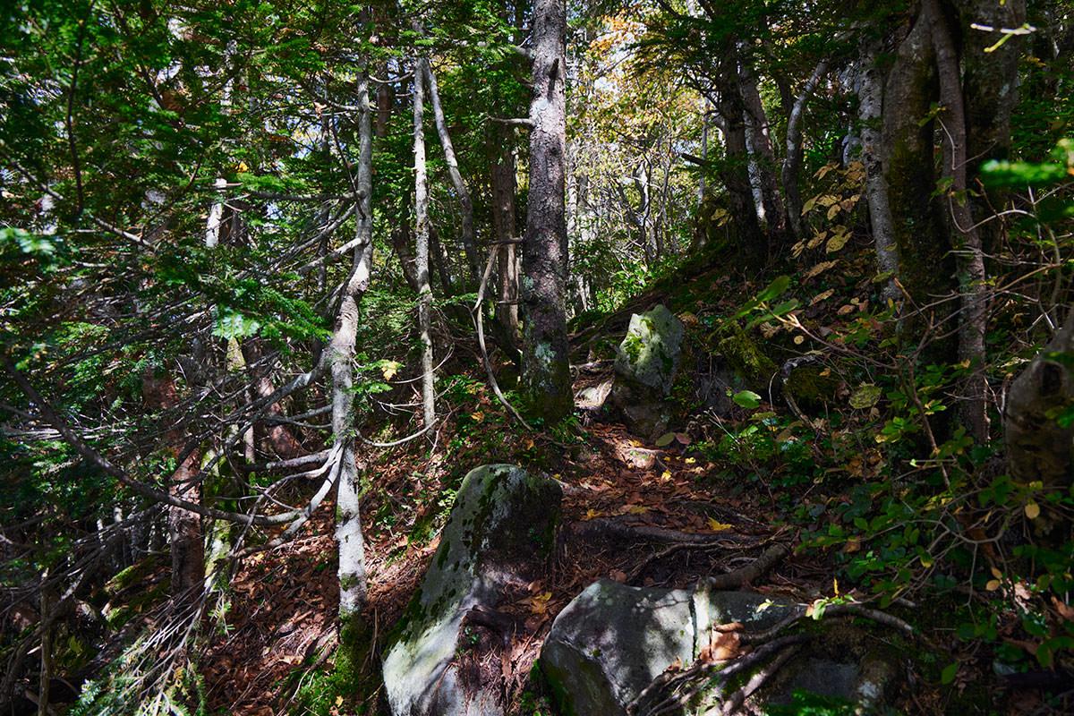 御飯岳-平らから木の間を登る