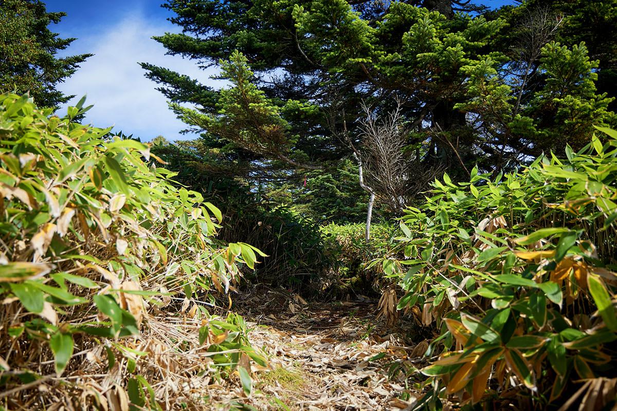 御飯岳-木の間を登ったら平らになる