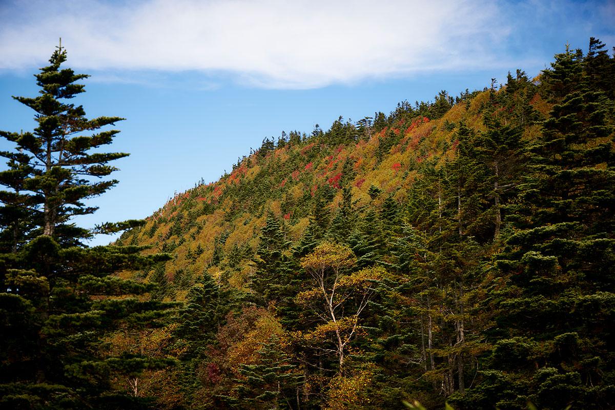 御飯岳-山頂の方を見たら良い色だった