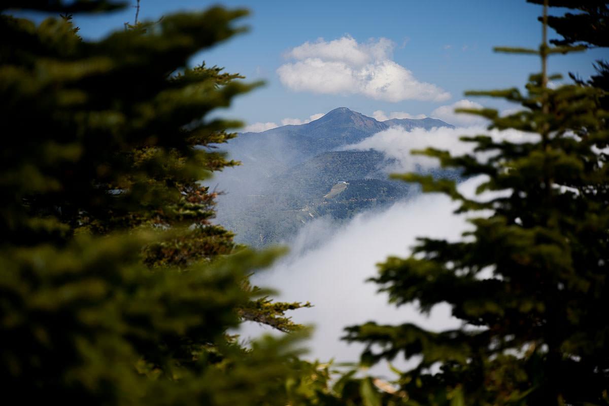 御飯岳-木の間から岩菅山が見える